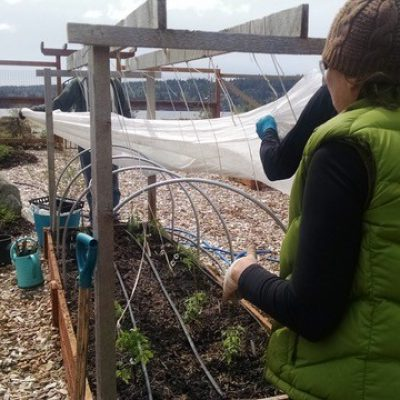 Growing Food in the City Certificate – 2017 Planting Day