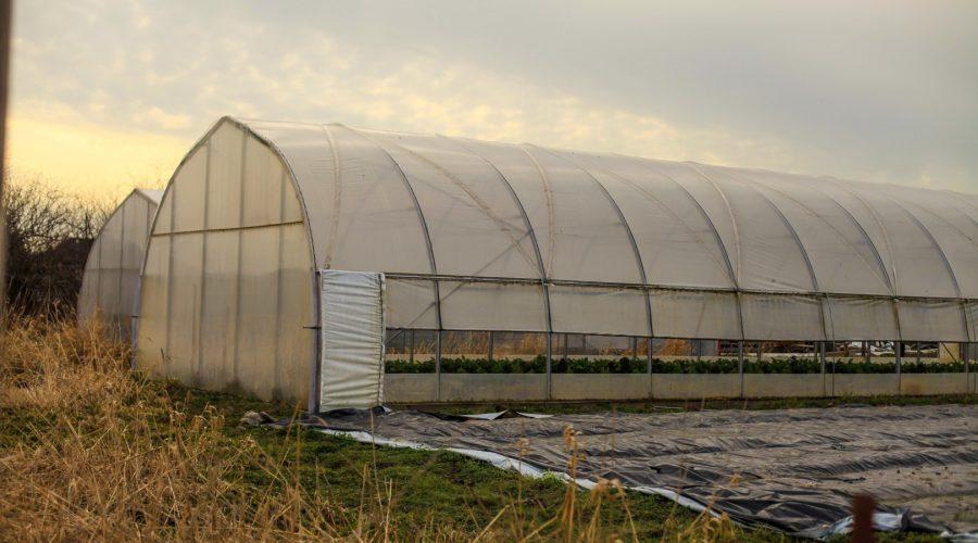 permaculture-47-terra-nova