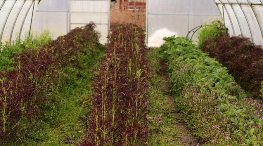 permaculture-45-terra-nova