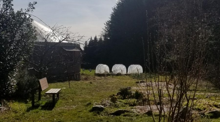 permaculture-51-ubc-farm